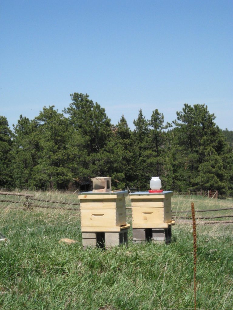 Mountain Beehives